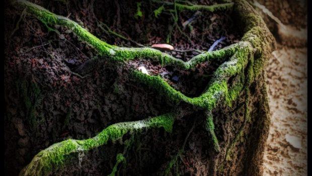 Arborescencia