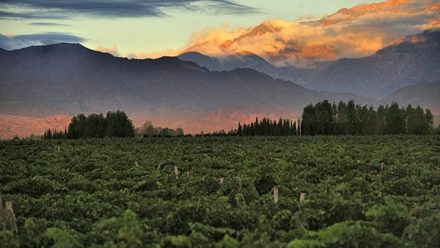 Mendoza Argentina the Scent of Malbec Wine