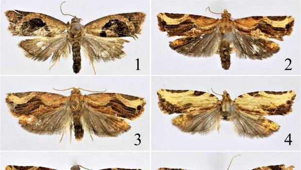 Lecciones breves de lepidopterología