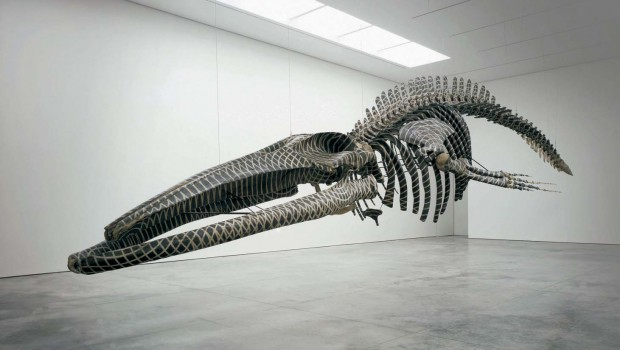 Gabriel Orozco: The Poetry of Forms