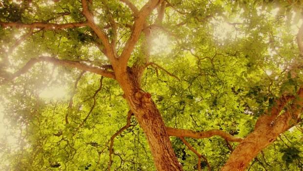 Mudanza del árbol