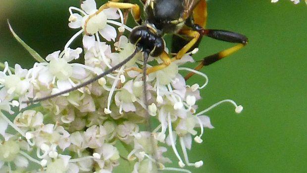 [Wasps]