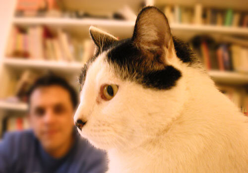 Un mexicano y su gato