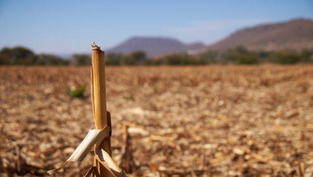 México de maíz